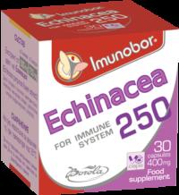 imunobor-echinachea